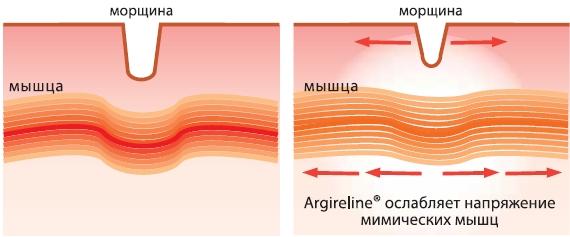 Argireline мягко расслабляет мимические мышцы