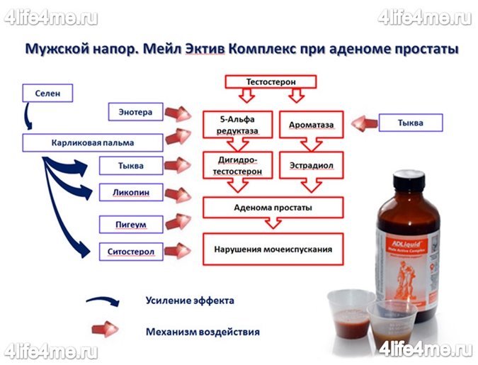 Коллоидная фитоформула Мейл Эктив Комплекс при аденоме