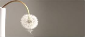 Поднять неподъемное: эректильная дисфункция