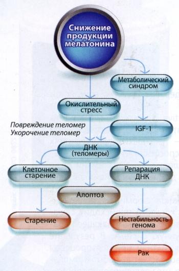 Вплив зниження вироблення мелатоніну на організм