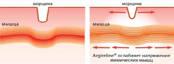 Argireline мягко расслабляет мимические мышцы, сохраняя их подвижность
