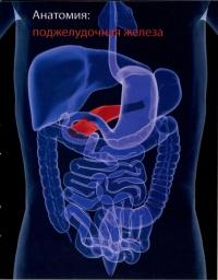 Ожирение и патология эндокринной системы