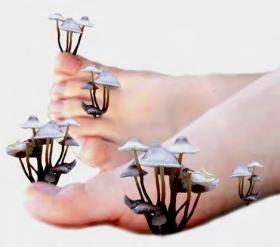 Как жить без грибов. Грибки и грибковые заболевания