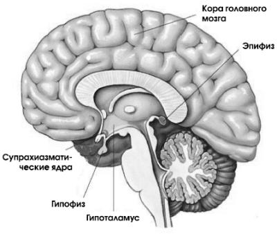 Мелатонин — эликсир молодости и здоровья
