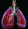 Терапия внебольничной пневмонии на фоне герпесвирусной инфекции