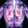 Коллоидная фитоформула каскадных антиоксидантов – новые технологии