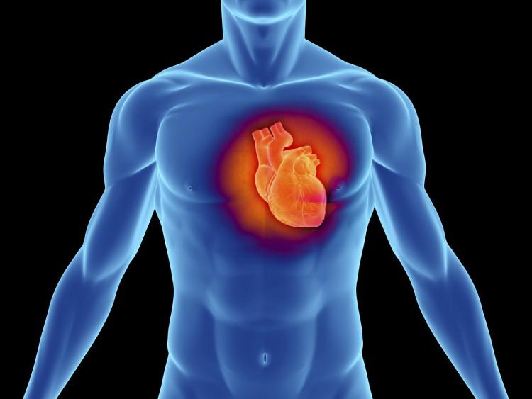 Схемы применения продукции АПИФАРМ при сердечно-сосудистой патологии
