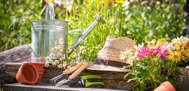 Дачный сезон — время здоровья и энергии!