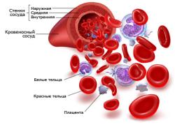 Кровь и кроветворение