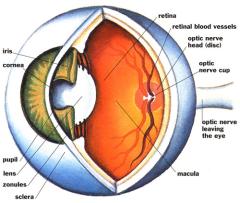 Глаз - питание и здоровье