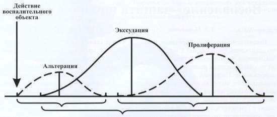 Последовательность развития стадий воспаления