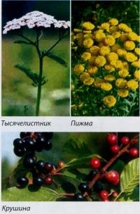 Травы против лямблиоза