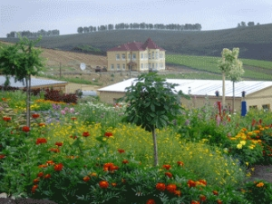 Экскурсия «Цветущая долина». В гармонии с природой
