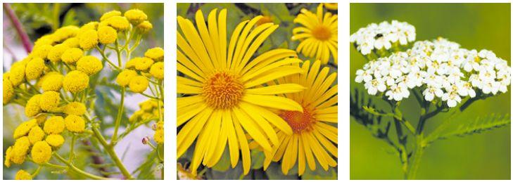 Природные растительные средства в борьбе с лямблиозом