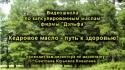 Видеошкола - Кедровое масло - путь к здоровью