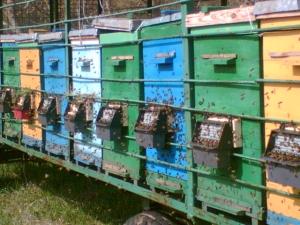 Применение ЭМ-технологии в пчеловодстве