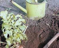 Пять способов осенней обработки почвы по ЭМ-технологии