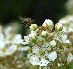 Применение ЭМ-КЕРАМИКИ и «БАЙКАЛ ЭМ-1» в пчеловодстве