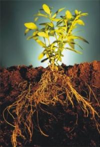 Замачивание семян перед посевом