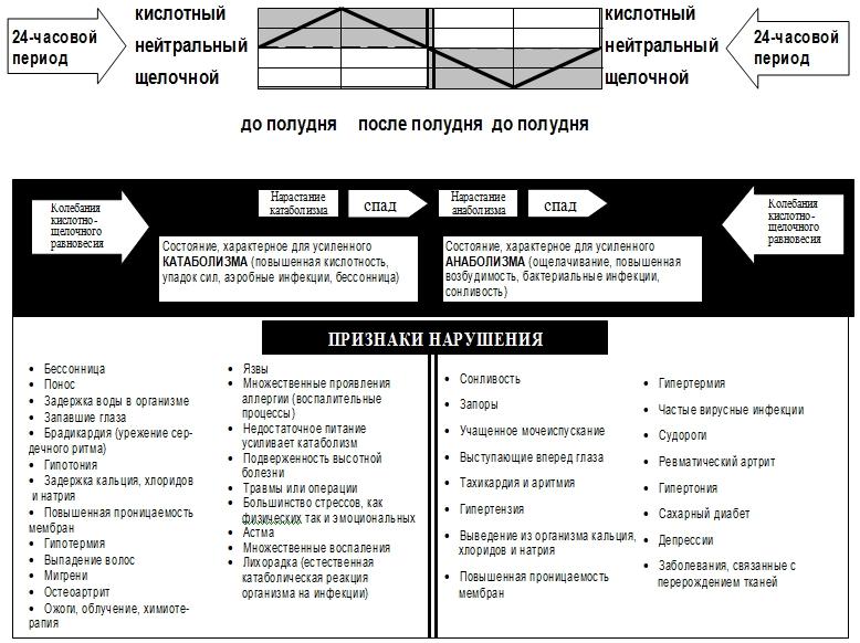 Равновесие анаболических и катаболических процессов в организме