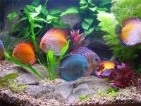 Испытание препарата «Байкал ЭМ1» в аквариумах