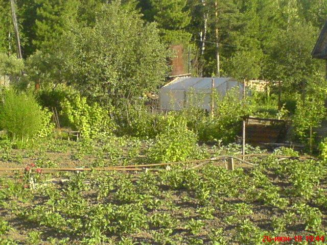 Фото 2. Соседский картофель в тот же день