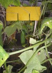 ЭМ-новинки для выращивания огурцов