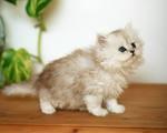 Использование ЭМ при выращивании домашних животных