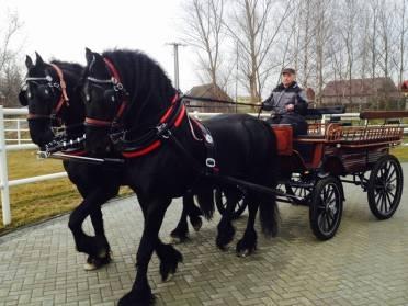 ЭМ- и Эмикс-технология в коневодстве Республики Польша