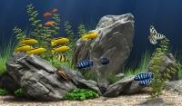 ЭМ в аквариум