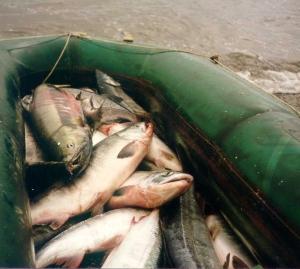 Применение ЭМ-препаратов в рыбных прудах Польши