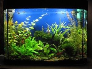 Испытание препарата «Байкал ЭМ1У» в аквариумах