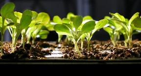 Подготовка семян для выращивания рассады