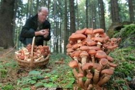 Применение ЭМ-технологии в грибоводстве
