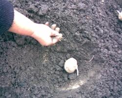 Осенний уход за картофельными грядами