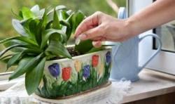 «ЭМИКС сухая подкормка» для зимнего ухода за растениями