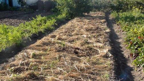 Почему нужно отказываться от перекапывания почвы?