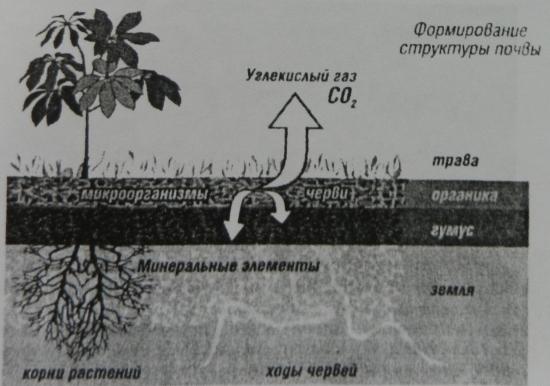 Рисунок 1. Формирование структуры почвы