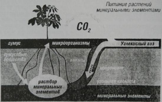 Рисунок 2. Схема питания растений минеральными элементами