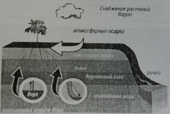 Рисунок 3. Снабжение растений водой