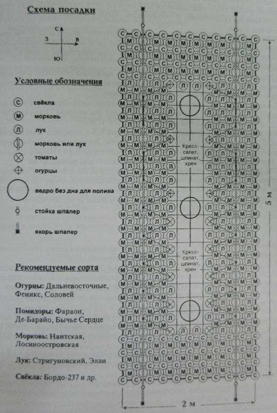 Рис. 5 Схема посадки.  9. В соответствии с агротехникой выращивания помидоров и огурцов в СОЗ с 25 апреля выращенную...