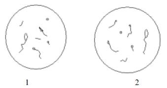 Характеристика спермиев в контрольной (1) и опытной (2) группах мышей