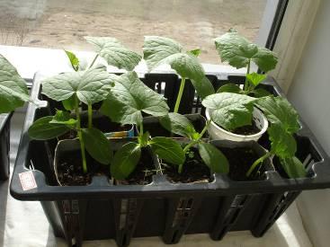 Готовим почву для выращивания рассады