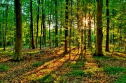 ЭМ-технология в лесоводстве