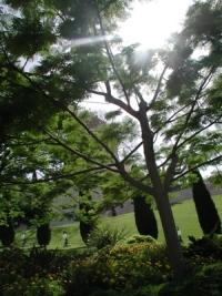 Биологи применили бактерии для ускорения роста деревьев