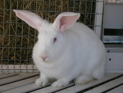 Опыт применения ЭМ-технологии в кролиководстве