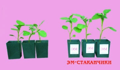 Умная пластмасса для комнатных растений