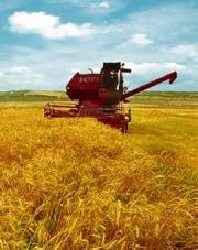 Використання ЕМ-технології в сільськогосподарському виробництві