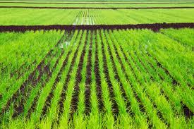 Новые эффективные агротехнические приемы на участке