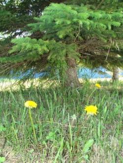 Применение препарата «Байкал ЭМ1» для восстановления лесов